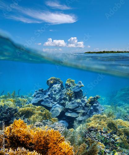 Podziemny widok rafy koralowej pod wodą