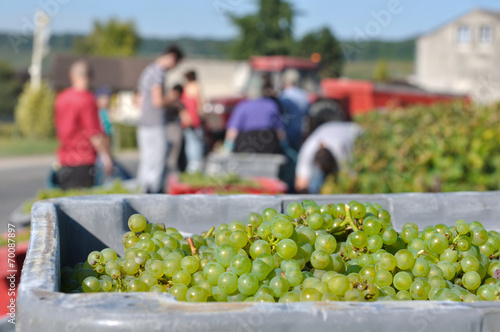 Fotografía  vendanges