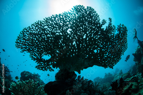 Poster Onder water Coral Silhouette