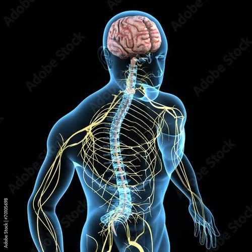 Obraz Nervous system - fototapety do salonu