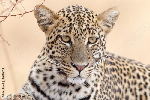 Tuinposter Luipaard Leopard - Portrait