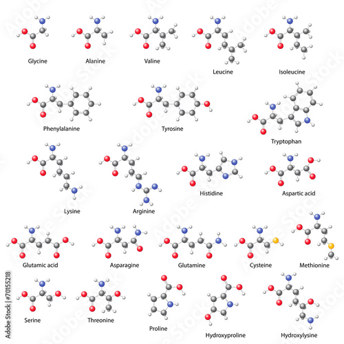 Photo Amino acids -  main structural chemical formulas