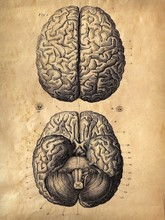 Vintage Anatomical Chart