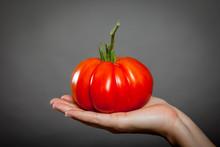 Tomato On Hand