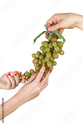 Staande foto Kameleon Male and female hands hold the grapevine