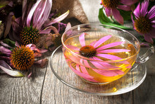 Herbal Tea. Echinacea Purpurea