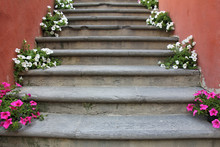 Red And White Flowers On Old Concrete Stairs