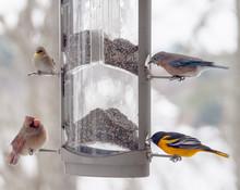 Multiple Bird Species At Bird Feeder On Cold Winter Morning