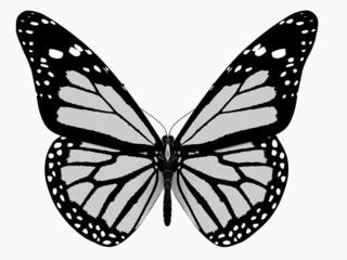 Fototapeta Minimalistyczny Butterfly