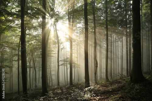 Autumn deciduous forest in foggy weather during sunrise