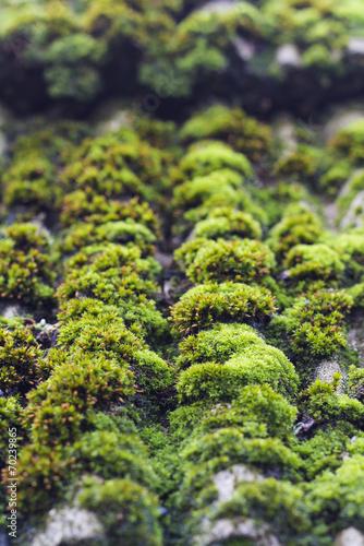 Cadres-photo bureau Jardin moss on old roof tiles