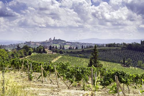 Fotografia  Vineyards surrounding San Gimignano, Tuscany. Color image
