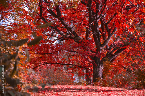 Poster Chocolate brown Autumn landscape
