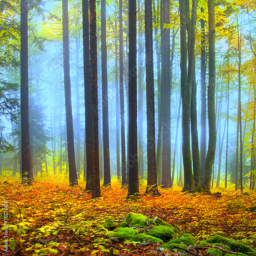 colorful-autumn-forest-scene