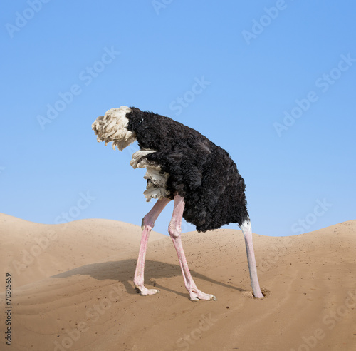 Deurstickers Struisvogel scared ostrich burying its head in sand concept