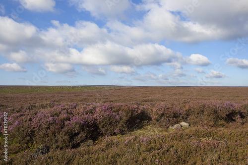 Valokuva  windswept moorland