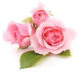 Fototapeta Pink Roses
