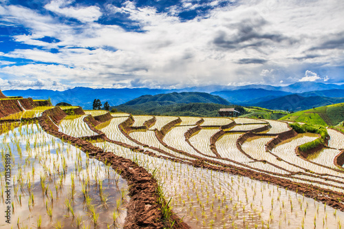 Garden Poster Rice fields Paddy or rice field at Pa Pong Peang in Chiangmai, Thailand
