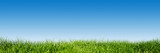 Fototapeta Nature - Green grass on blue clear sky, spring nature theme. Panorama