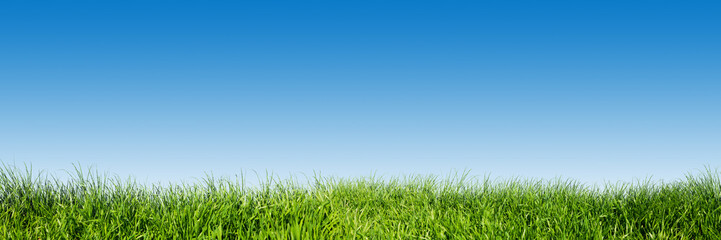 Fototapeta Green grass on blue clear sky, spring nature theme. Panorama