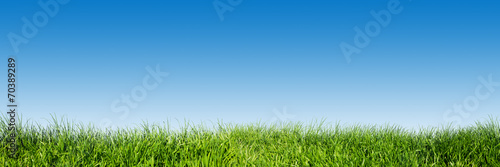 Fotobehang Gras Green grass on blue clear sky, spring nature theme. Panorama