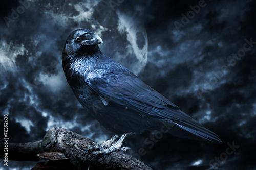 Fotografie, Obraz  Černý havran v měsíčním světle posazený na stromě