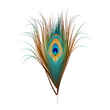 Vector Peacock Feather Isolate...
