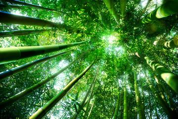 Obraz na Szklebamboo forest - zen concept