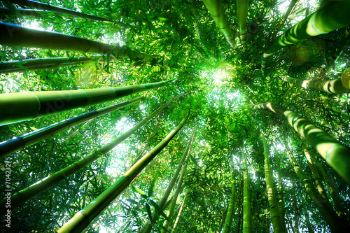 Spoed Foto op Canvas Bamboo bamboo forest - zen concept
