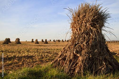 Valokuvatapetti Harvest Time