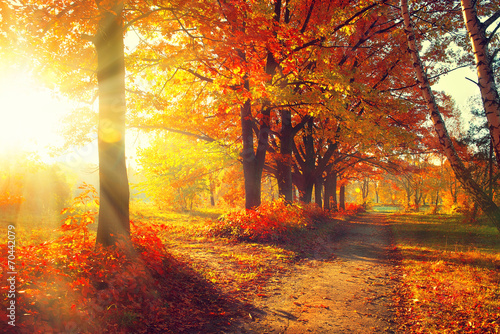Aluminium Prints Autumn Fall. Autumn Park. Autumnal Trees and Leaves in sun rays