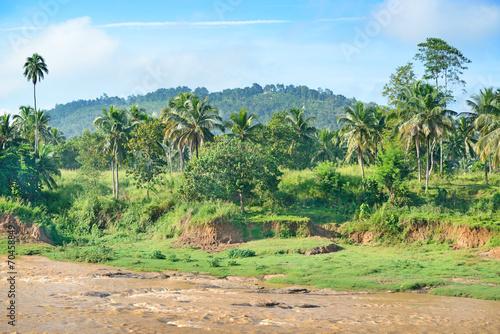 Fotografía  Equatorial forest near the river.