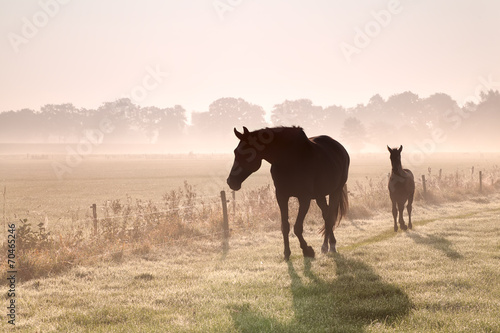 In de dag Paardrijden horse and foal silhouettes in fog
