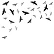 Background with birds silhouettes