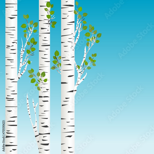 Canvas Prints Birds in the forest Birch trees with green leaves background