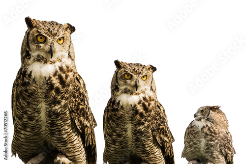 Photo  Owl trio