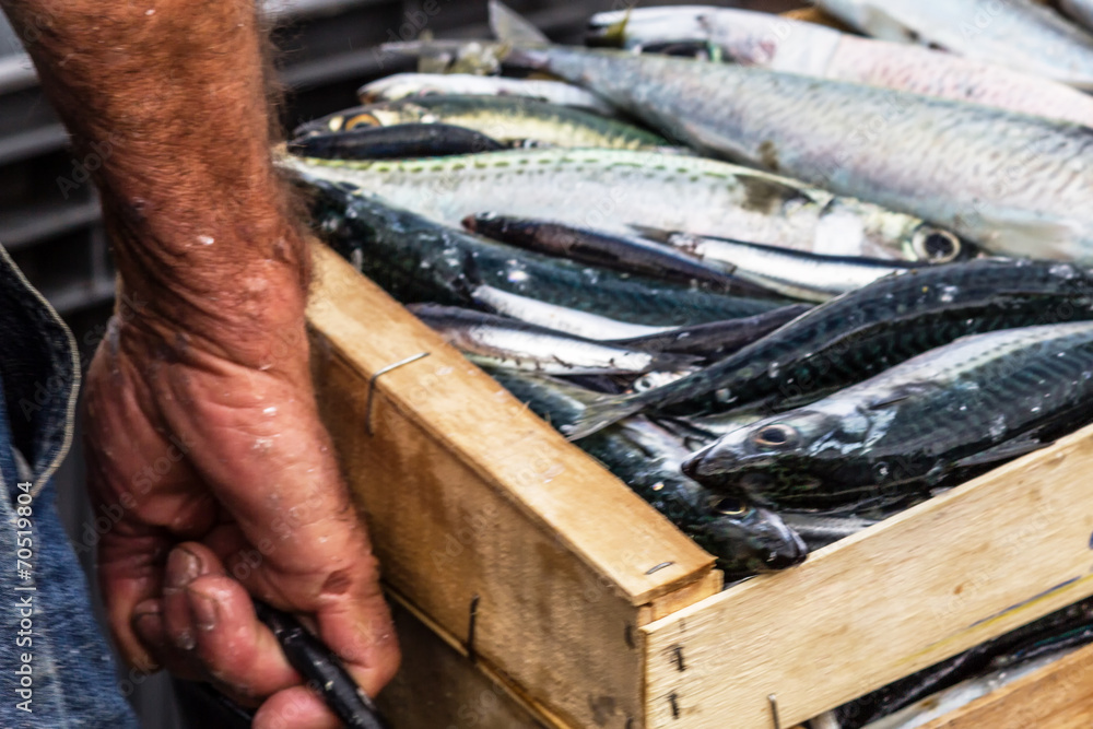 Fototapety, obrazy: Sardinen in der Packstation