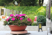 Blumentopf Auf Friedhof