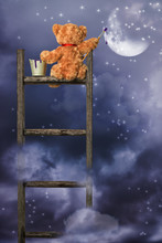 Teddy Painting At Night