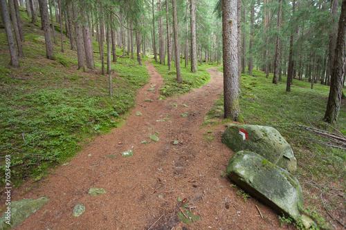 Fotografie, Obraz  Sentiero alpino