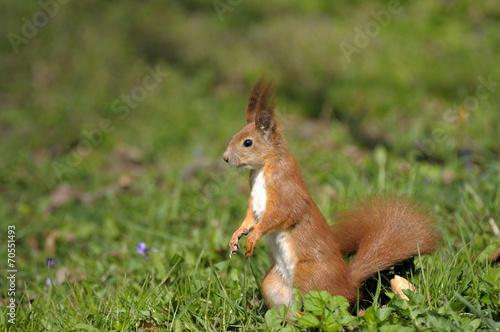 Tuinposter Eekhoorn Squirrel.