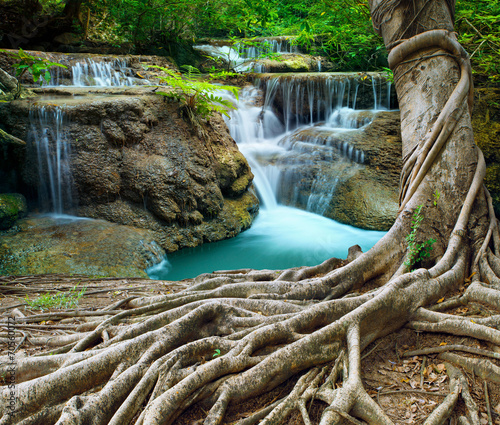 Cascades banyan tree and limestone waterfalls in purity deep forest use n