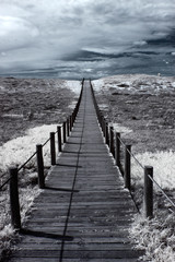 Fototapeta Morze Dune walkway