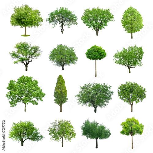 Obraz tree - fototapety do salonu