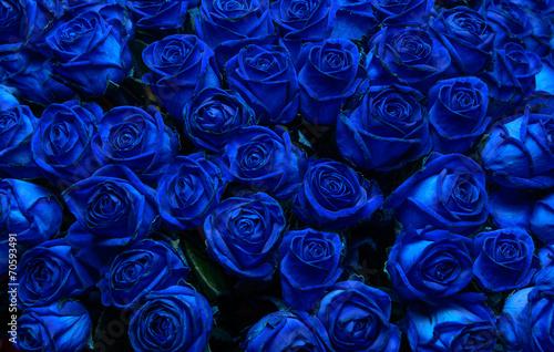 Plakaty niebieskie  blue-roses