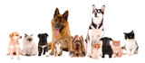 Fototapeta Zwierzęta - Collage of cute pets isolated on white