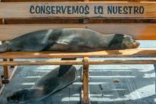 Sea Lion Taking A Nap On A Ben...