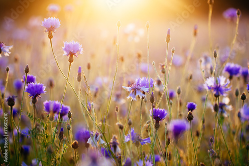 Sunrise on the meadow - 70602610