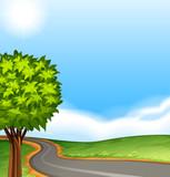 A tree along the road