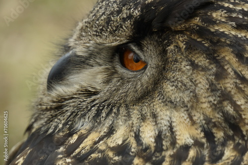 Fototapeta Closeup of an owl obraz na płótnie
